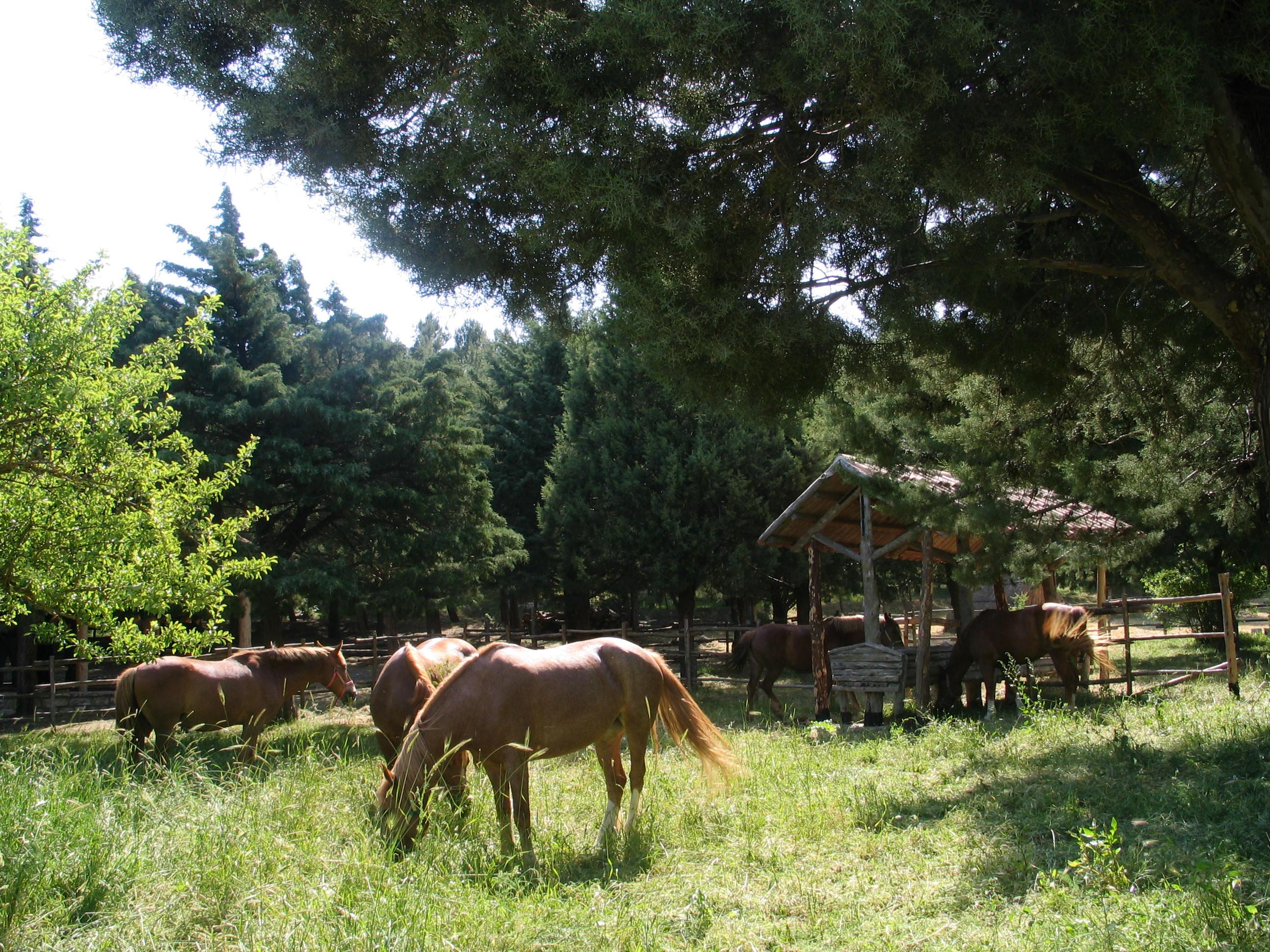Area Cavalli castronovo di sicilia